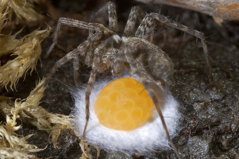 Глазунья по паучьи